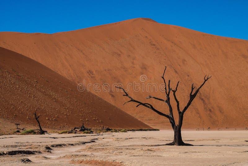 Visión escénica en Deadvlei, Sossusvlei Parque nacional de Namib-Naukluft, Namibia foto de archivo