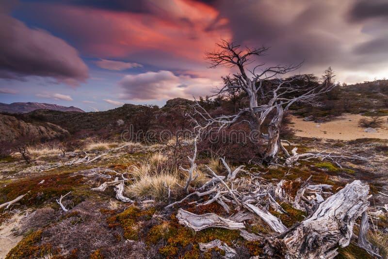 Visión escénica en las montañas de la Patagonia fotografía de archivo