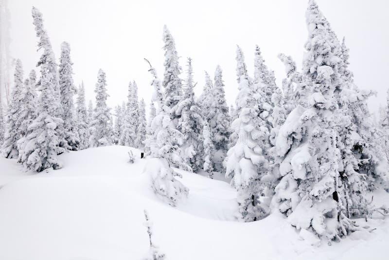 Visión escénica panorámica desde el top del invierno de los paisajes de la montaña val fotos de archivo