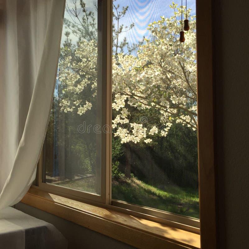 Visión hacia fuera una ventana del dormitorio imagen de archivo