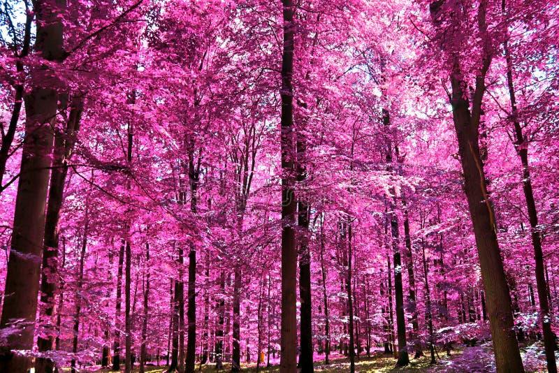 Visión infrarroja hermosa en un bosque púrpura de la fantasía fotos de archivo libres de regalías