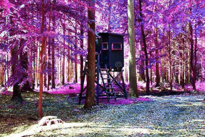 Visión infrarroja hermosa en un bosque púrpura de la fantasía fotografía de archivo libre de regalías