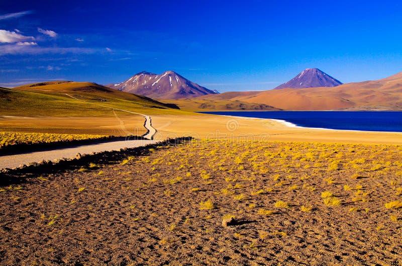 Visión a lo largo de la trayectoria y de los penachos amarillos secos de la hierba en el lago azul profundo en la laguna Miscanti fotografía de archivo