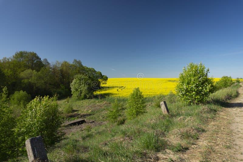 Visi?n a lo largo de un camino de campo de florecer el canola amarillo foto de archivo
