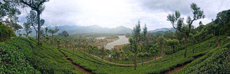 Visión panorámica en Munnar en Ghats occidental, Kerala foto de archivo