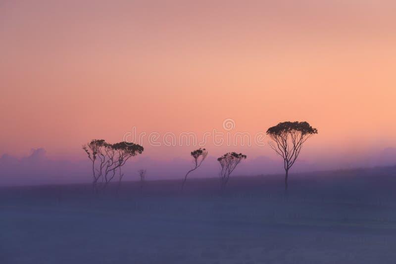Visión que sorprende con los árboles de niebla en horizonte en salida del sol pasto del otoño y del verano Fondo natural hermoso, fotos de archivo libres de regalías