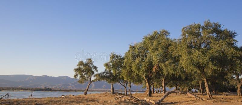 Visión sobre el río Zambezi imagen de archivo libre de regalías
