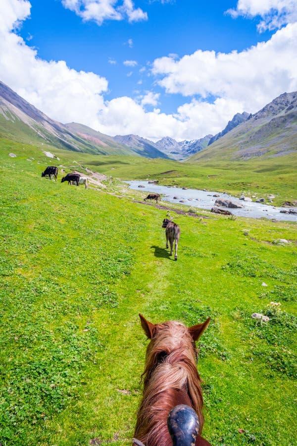 Visión sobre el valle de la parte posterior del caballo, Kirguistán imagen de archivo