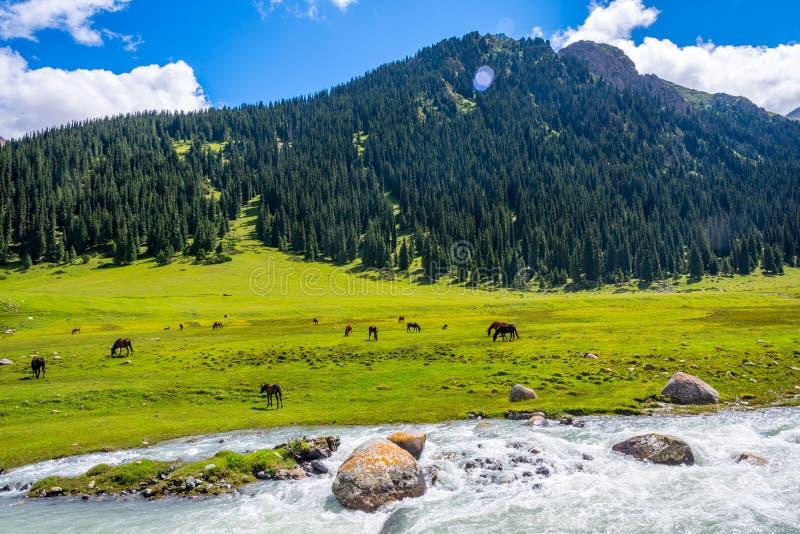 Visión sobre el valle de la parte posterior del caballo, Kirguistán imágenes de archivo libres de regalías