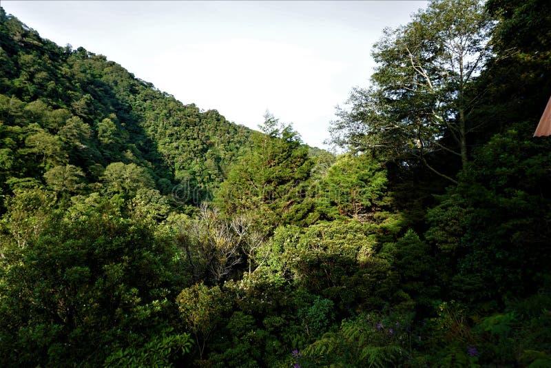 Visión sobre la selva tropical en Juan Castro Blanco National Park en mañana soleada imágenes de archivo libres de regalías