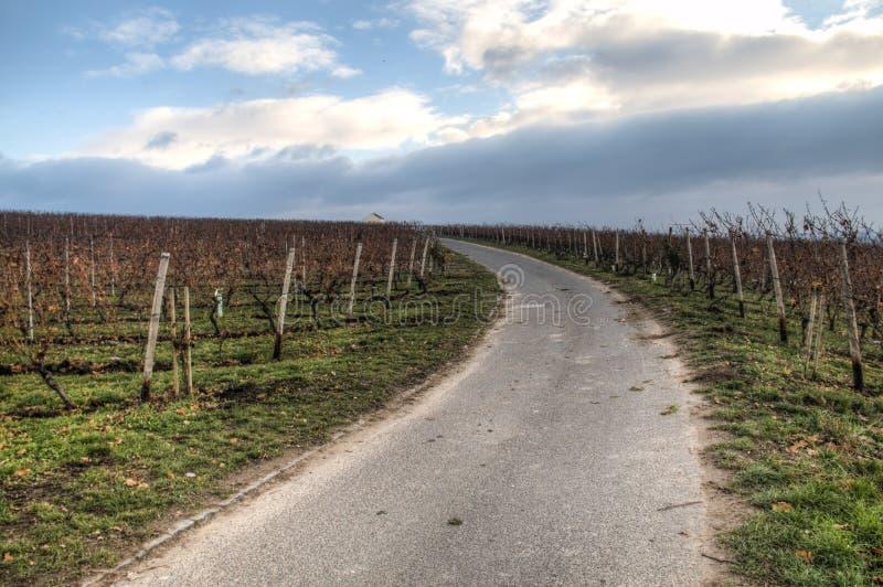 Visión sobre los viñedos en Hochheim, Alemania foto de archivo