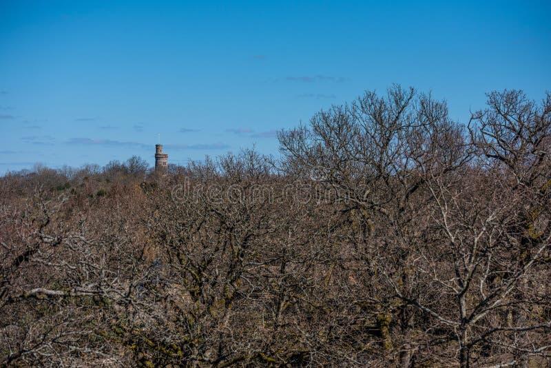 Visi?n sobre un bosque de la pieza en primavera temprana Una torre de piedra en la distancia foto de archivo