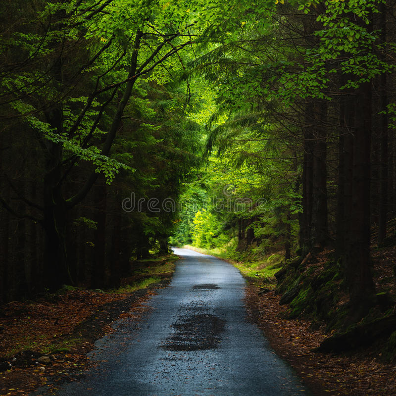 Visión sobre un camino recto en la madera oscura imagenes de archivo