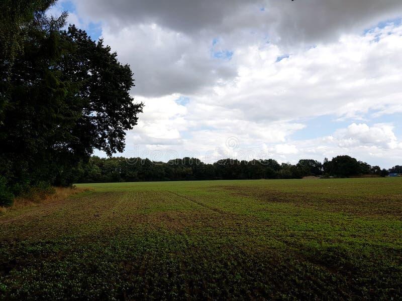 Visión sobre una tierra cultivada y un área del árbol y con un cielo nublado arriba foto de archivo libre de regalías
