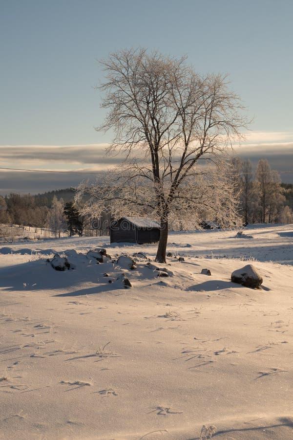 Visión soleada una cruz un campo nevado en invierno fotografía de archivo
