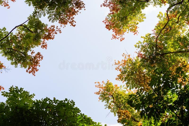 Visión superior con la rama de árbol y el cielo azul fotos de archivo libres de regalías