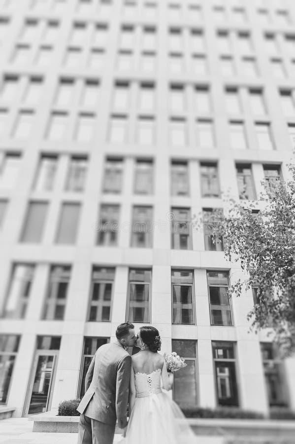 Visión trasera que besa y que abraza pares al aire libre imagen de archivo