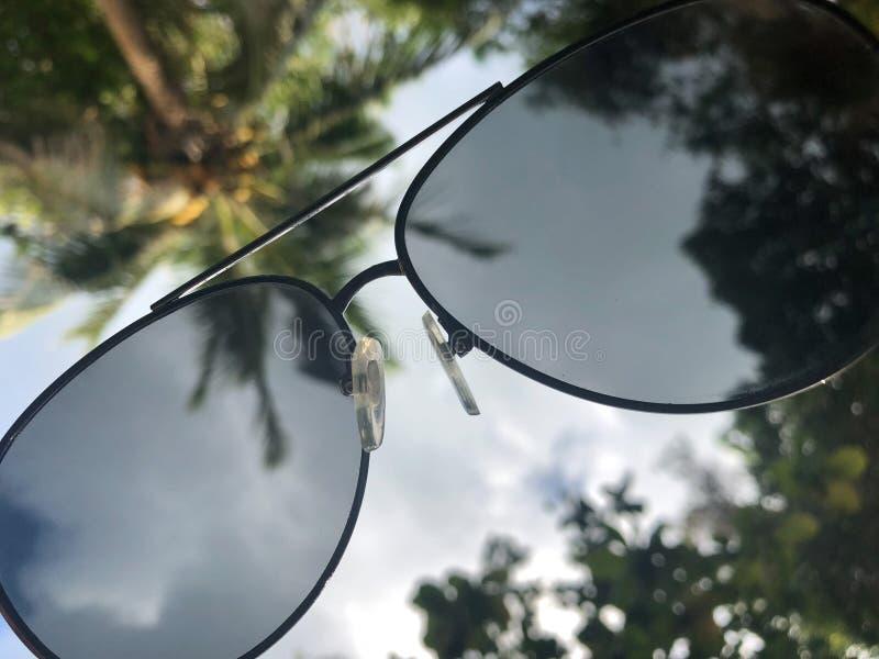 Visión a través de las gafas de sol al cielo y a las palmeras meridionales, sensación del descanso y relajación fotos de archivo libres de regalías