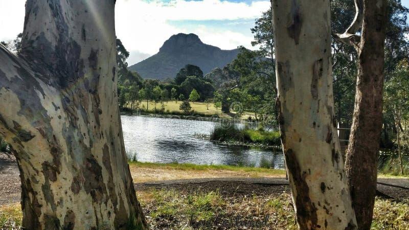 Visión a través del eucalipto fotografía de archivo libre de regalías