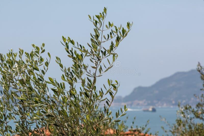 Visión a través del jardín sobre el mar fotos de archivo libres de regalías