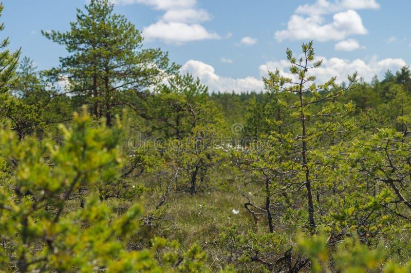 Visión a través del matorral del área del pantano fotos de archivo
