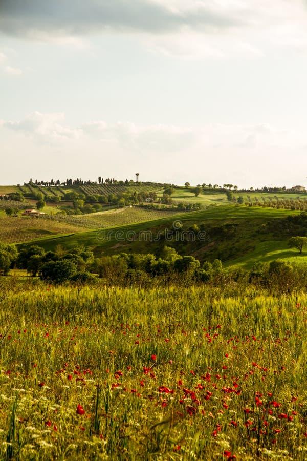 Download Visiónes Preciosas Toscanas Tradicionales Imagen de archivo - Imagen de hierba, toscana: 41904421