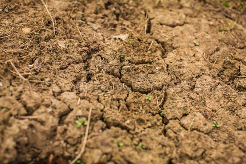 Visi?n superior tirada de suelo agrietado suelo seco en grietas en la primavera la hierba joven crece fuera de la tierra seca foto de archivo