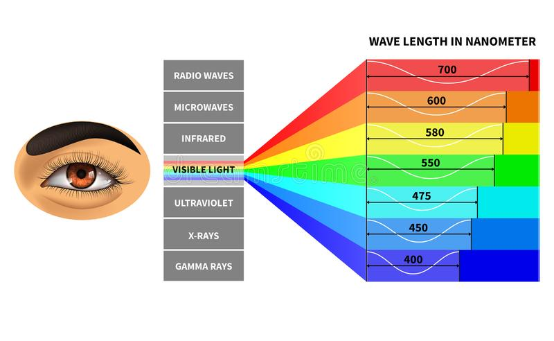 Visible light spectrum. Color waves length perceived by human eye. Rainbow electromagnetic waves. Educational school stock illustration