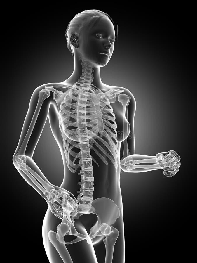 visible skeleton vector illustration