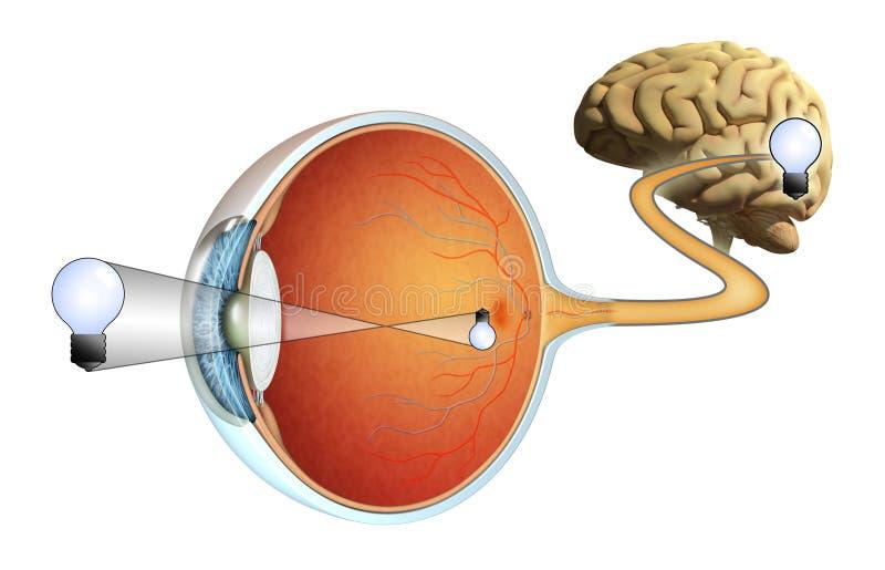 vision stock illustrationer