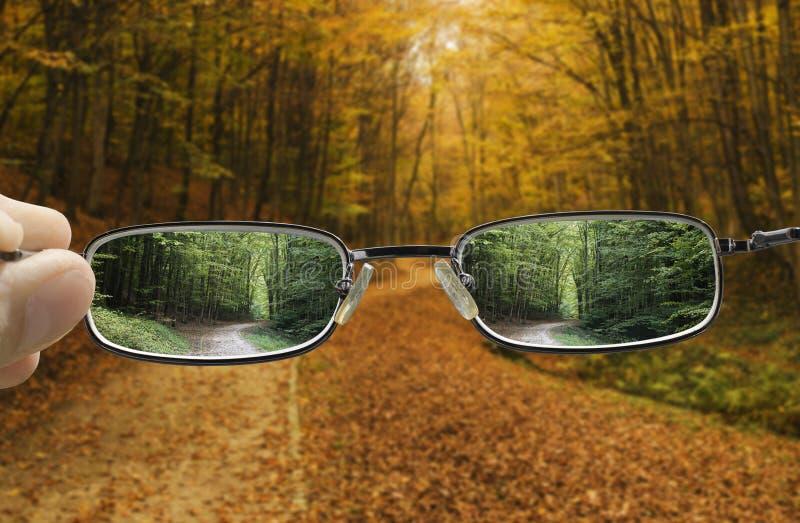 Vision de dar vuelta un otoño en la primavera fotos de archivo