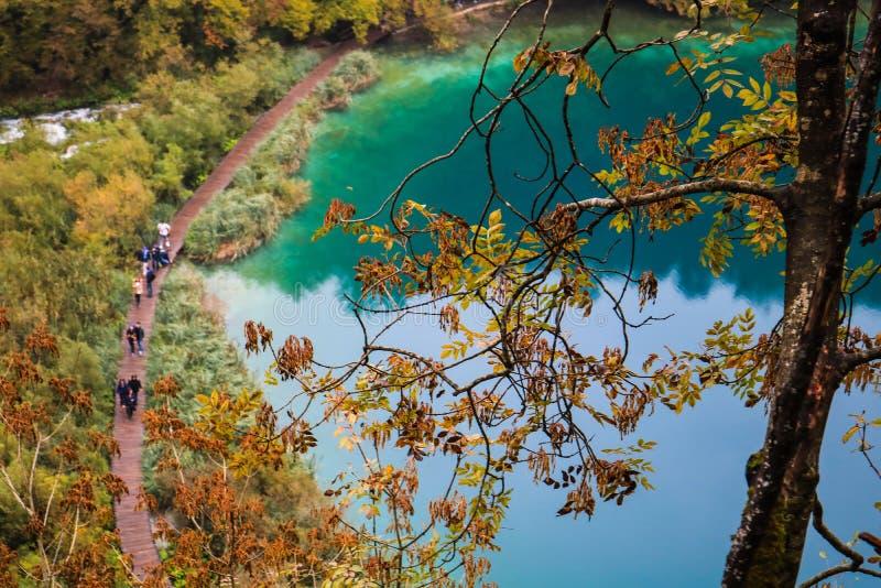 Vision de los lagos azules del plitvice con un árbol en foco foto de archivo