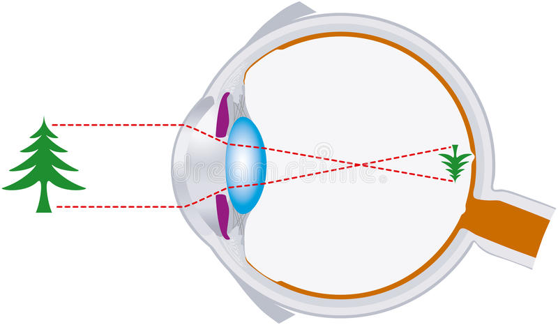 Vision, eyeball, optics, lens system. Rays of light are bundled by the lens in the human eye and are inverse focused on the retina royalty free illustration