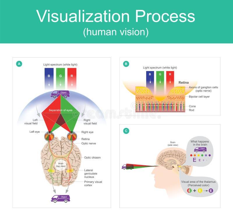 Vision för Visualizationprocessmänniska vektor illustrationer