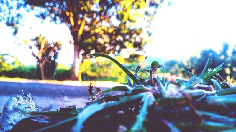 Visione della pianta fotografia stock libera da diritti