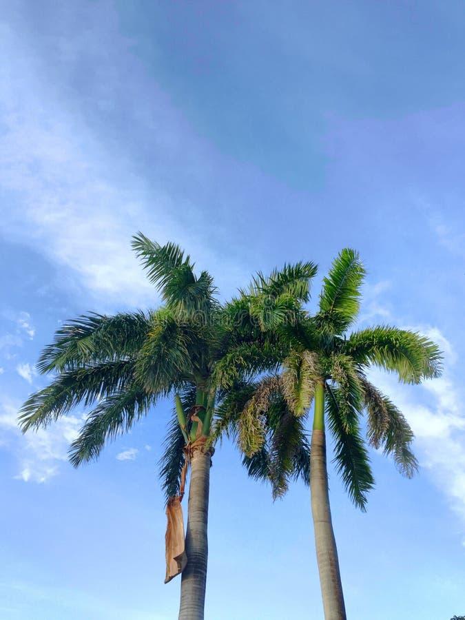 Visioni tropicali immagini stock libere da diritti