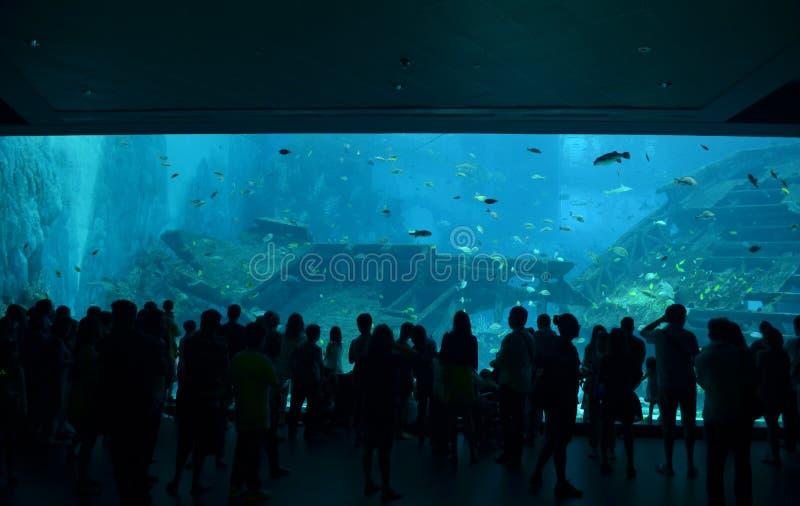 Visionneuses d'aquarium à Singapour photo stock