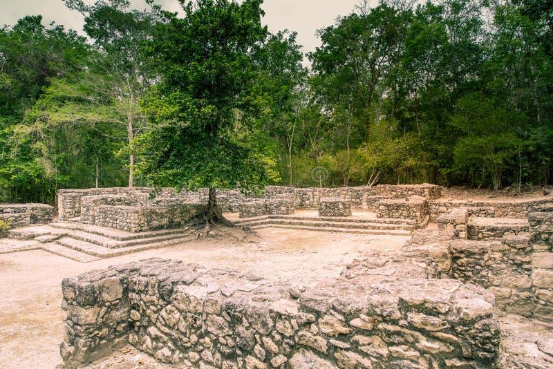 Visit of the ancient maya city of Calakmul - South Yucatan - Mex stock images
