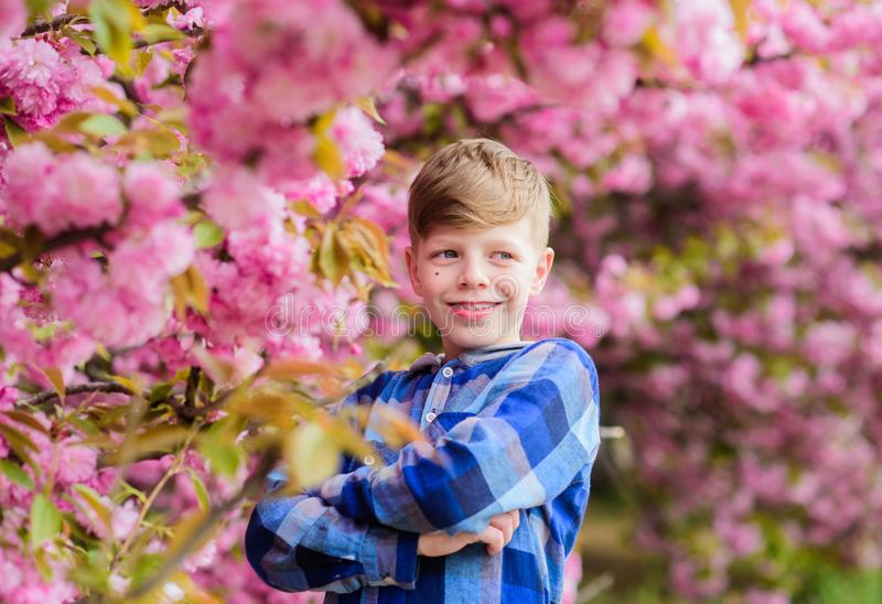 Visit sakura garden. Tender bloom. Cute child enjoy warm spring day. Boy teen posing near sakura. Child on pink flowers stock image