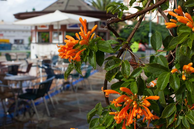 A visit to the island of La Palma on the Atlantic ocean stock photos