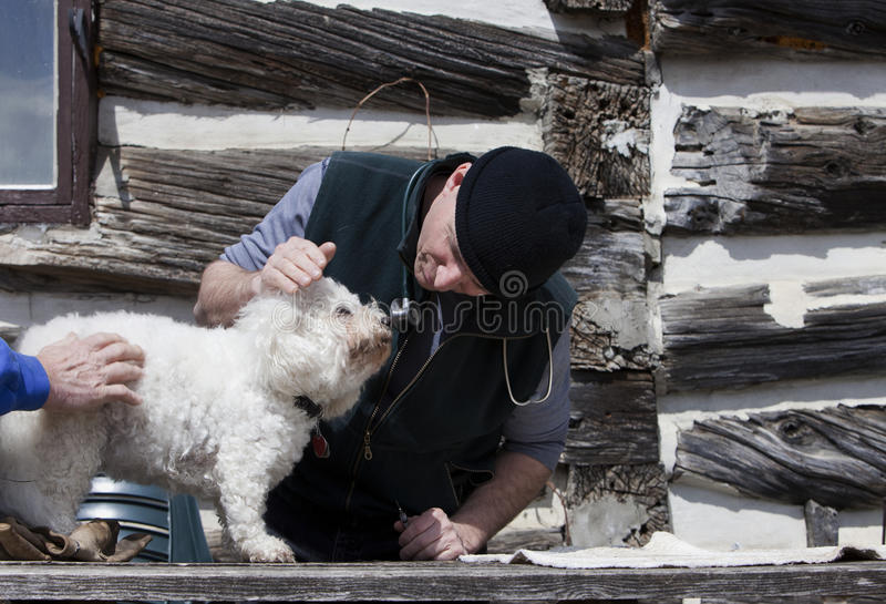 Download Visit with the vet stock photo. Image of injection, bichon - 19114262
