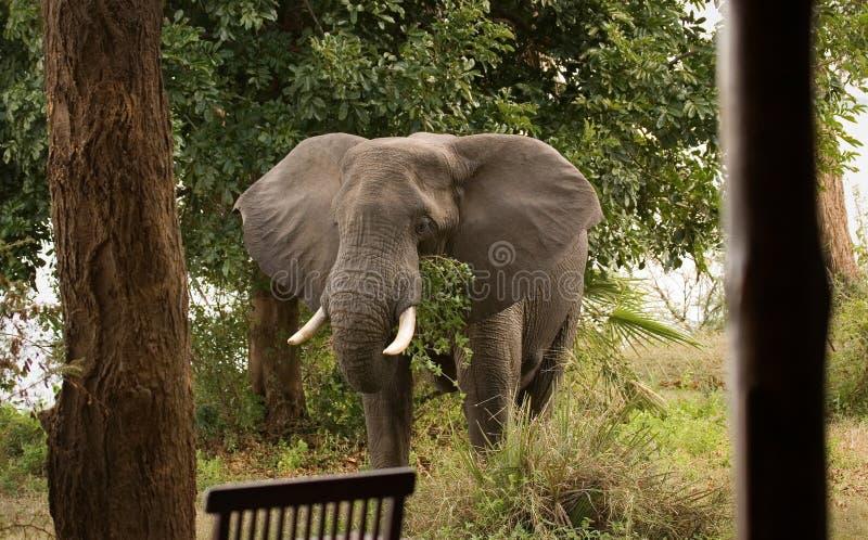 Visita del elefante imagen de archivo