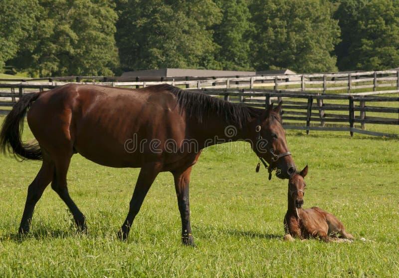 Visita di mattina all'azienda agricola del cavallo fotografie stock libere da diritti