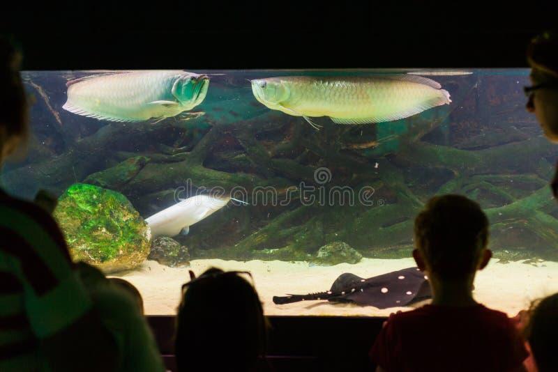 Visitantes do aquário foto de stock royalty free