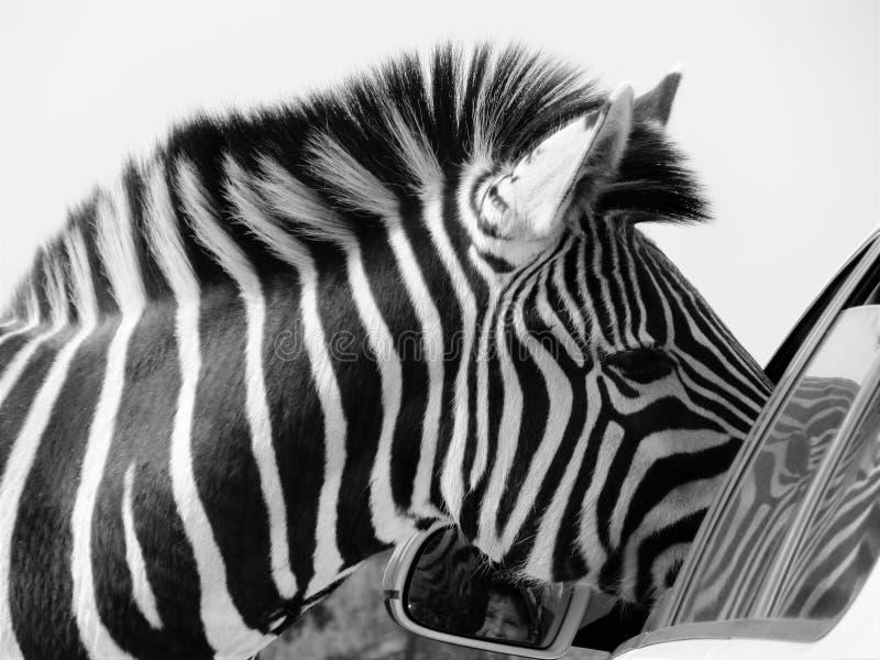 Visite au parc de safari photographie stock