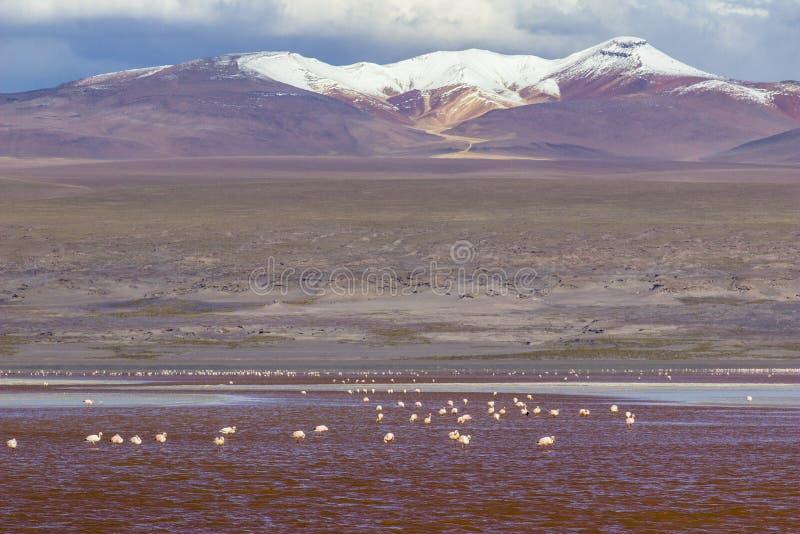 Visite d'Uyuni autour des lacs et des volcans des Andes boliviens un voyage étonnant image stock