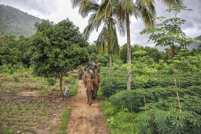 Visite de jungle d'éléphant photo stock
