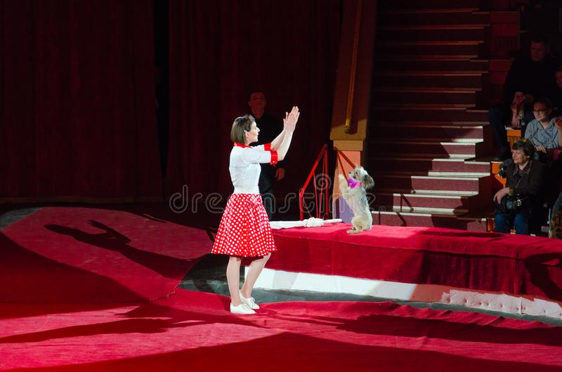 Visite du cirque d'état de Moscou baptisé du nom de Nikulin Chiens qualifiés sous la direction d'Alisa Nesterova image stock