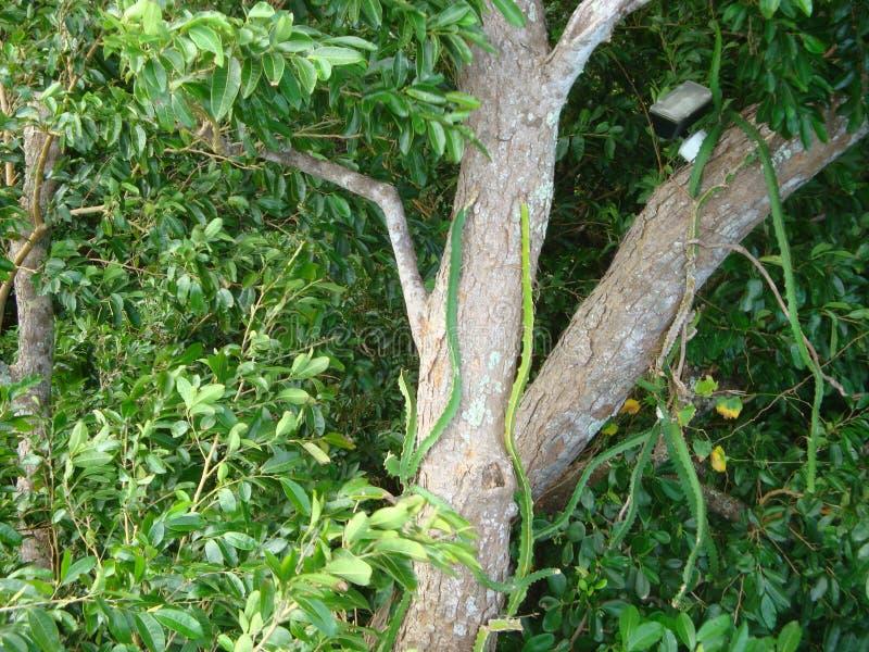 Visite mystique de bobsleigh de montagne dans Ocho Rios Jamaïque, une excursion sur une croisière des Caraïbes photos stock
