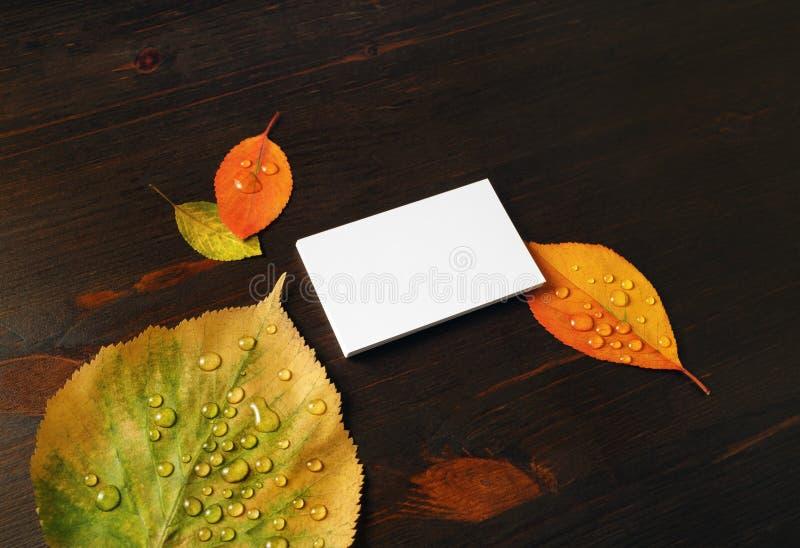 Visitenkarte, Herbstblätter lizenzfreie stockfotos